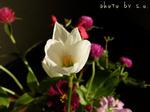 秋 花の束