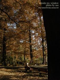 のっぽの木の下