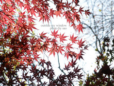 紅葉の光と影 (2)