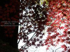 紅葉の光と影 (3)