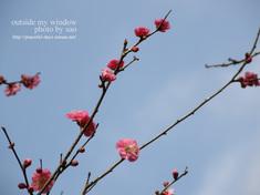 梅の写真(2)