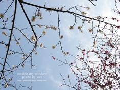 梅の写真 (8)