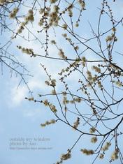 梅の写真(6)