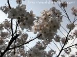 春への憧れ