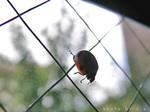 太陽に向かって飛ぶ虫