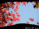 紅葉の木(4)