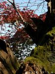 苔の生えた木