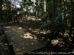 憩いの森の中(1)