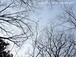 憩いの森の空
