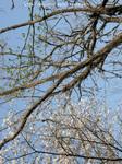 枝に枝が絡まった木が主役の写真