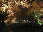 夜桜(18)