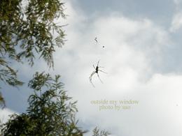 雲と蜘蛛と