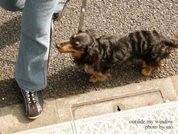 愛犬ティモシー