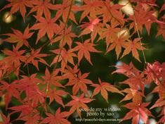 寒さにぽっと染まった葉