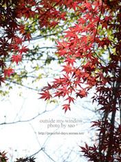 紅葉の光と影 (1)