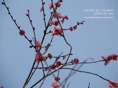 梅の写真(1)
