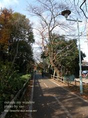 花小金井の遊歩道